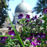 Flowers at the Church of the Beatitudes